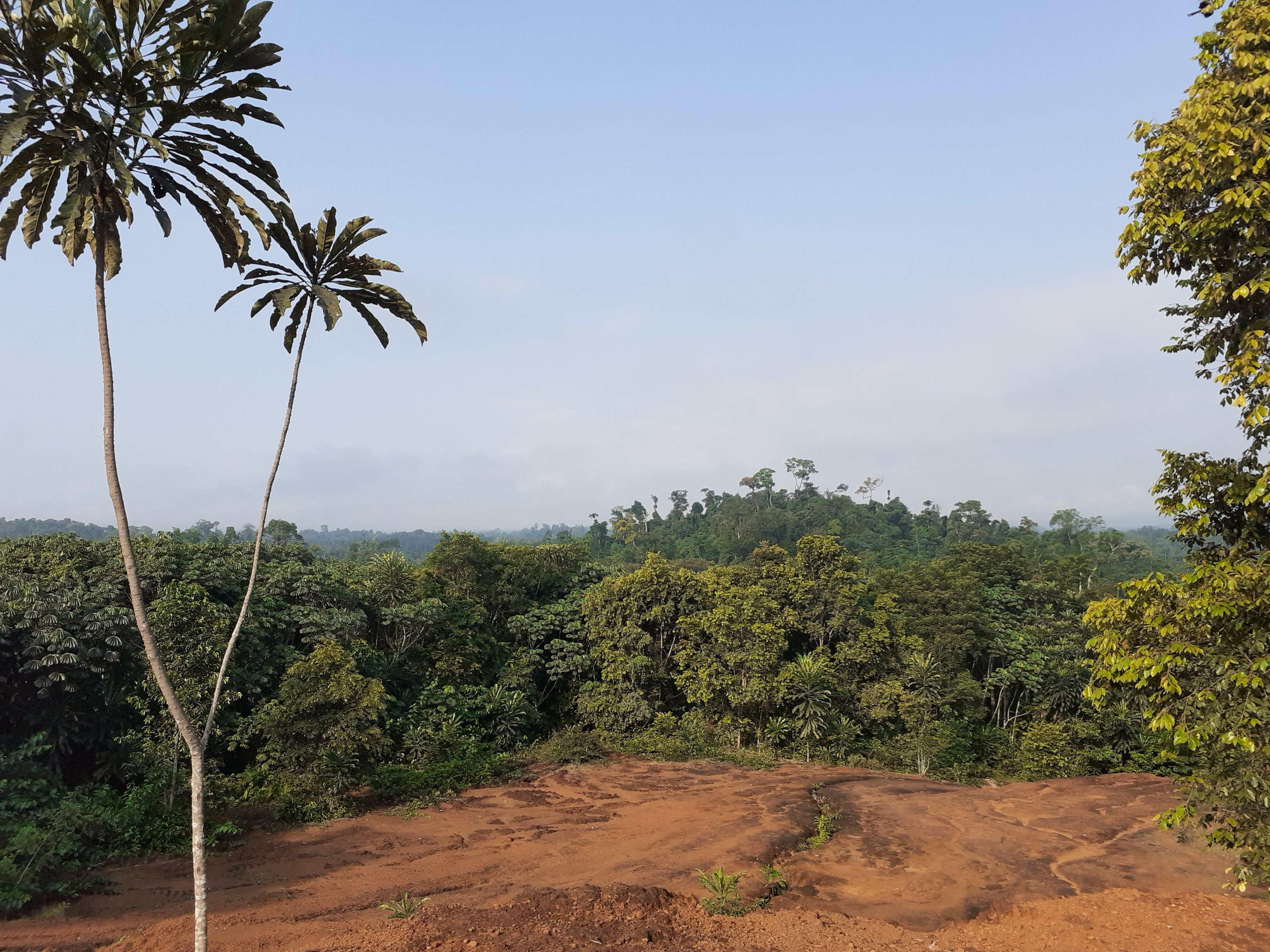 View of the Liberian Jungle
