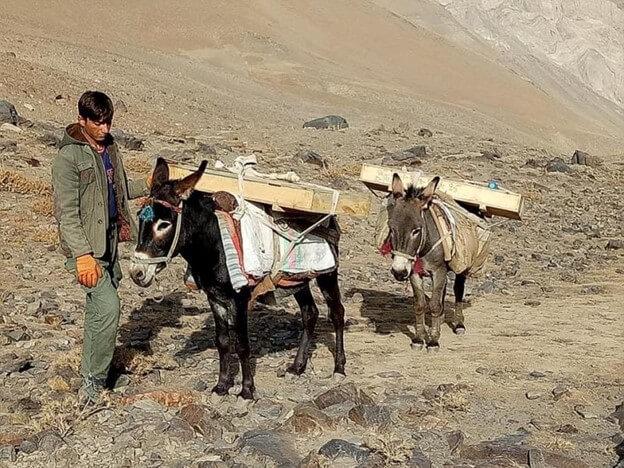 Donkeys for support